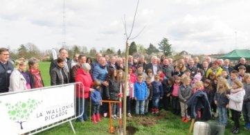 Un arbre pour la Wallonie picarde