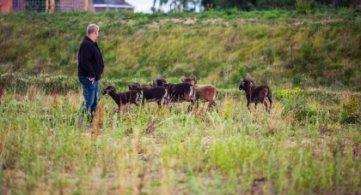 Des moutons Soay pour la gestion différenciée de la ZIT de Willemeau